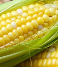 Bitcorn Harvest #14